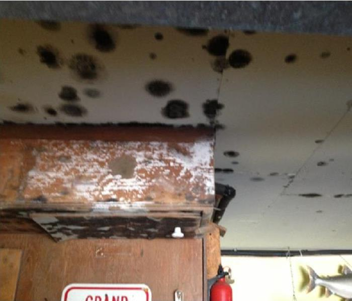 Mold in a residential home