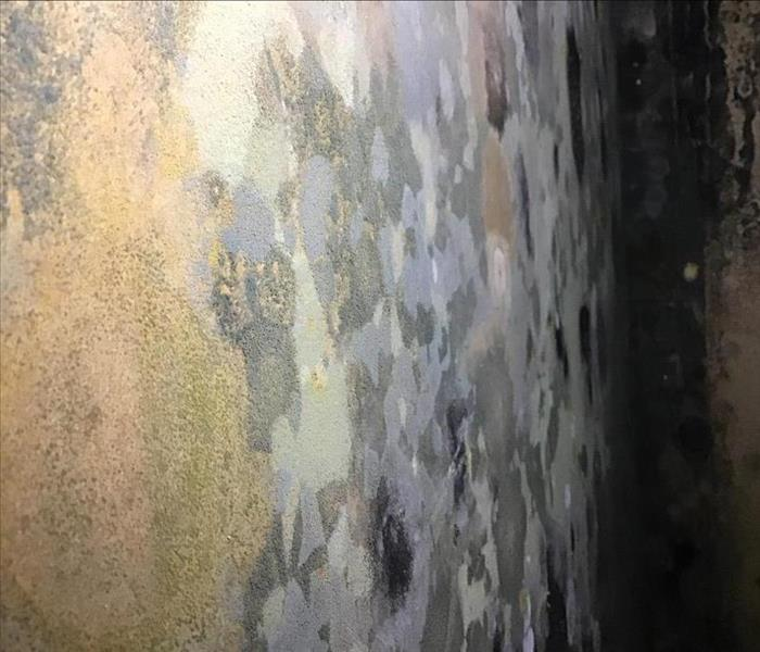 Hidden Mold On Drywall